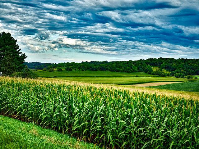 W jaki sposób może być realizowana ochrona zbóż